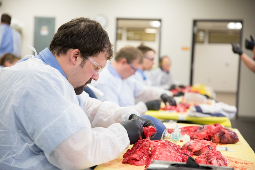 male EMT student dissects pig organs at Moraine Park