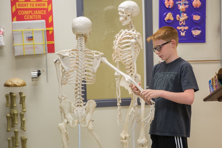 Boy bends classroom skeleton arm during art activity at Moraine Park TKC summer camp