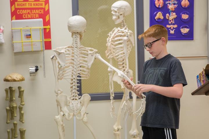 Boy bends classroom skeleton arm during art activity at Moraine Park TKC summer camp